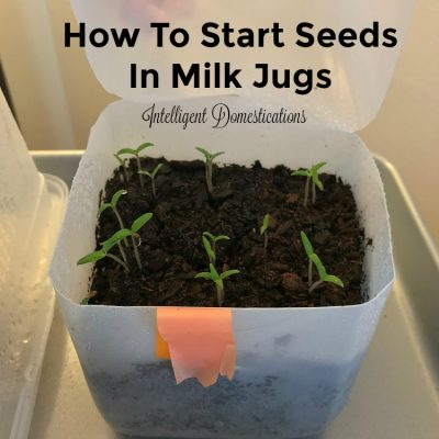Winter Seed Sowing. How To Start Seeds in Milk Jugs