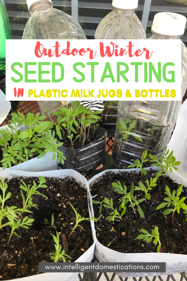 Repurpose Plastic Milk Jugs and containers to make Mini Terrariums for Outdoor Seed Starting. You can leave these outside in rain or snow for your seeds to germinate and be ready to transplant before spring planting. #seedstarting #intellid