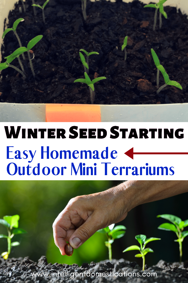 Repurpose old milk jugs into mini terrariums for winter seed starting. It's a cheap and easy way to start your garden seeds in the middle of winter. #seedstarting