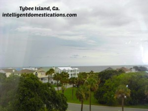 Tybee Island, Ga. View of ocean by intelligentdomestications.com
