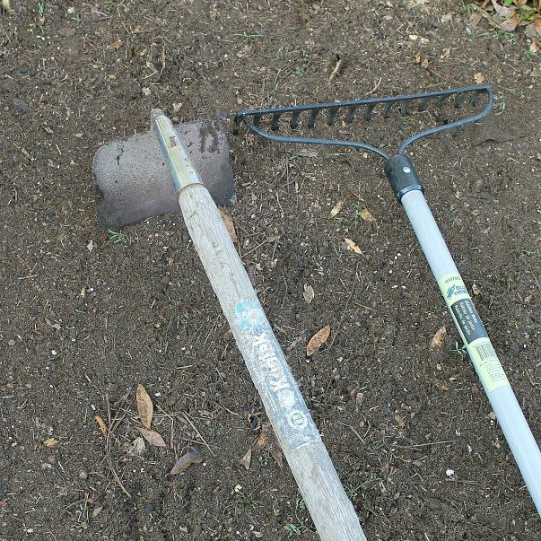 How to grow marigolds from seed to bloom. How to grow marigolds. Marigold flowers blooming in the yard. Photo of a rack and hoe in freshly prepared dirt for flower planting