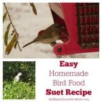 Easy Homemade Bird Food Suet Recipe 550x553.intelligentdomestications.com
