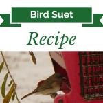 HomemadeSuet Recipe