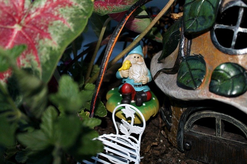 A single gnome guards the cottage from his perch on a toad stool. My Fairy Garden Tour 2016. Fairy Garden Ideas. Flowers to use in a flower garden. #fairygarden #gnomes #fairygardenideas