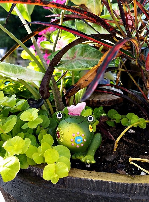 I wonder if the residents of our Fairy Garden know there is a frog hiding in the brush. My Fairy Garden Tour 2016. Fairy Garden Ideas. Flowers to use in a flower garden. #fairygarden #gnomes #fairygardenideas