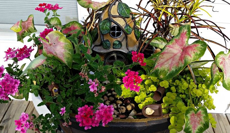 Flowers to use in a Hidden Fairy Garden. The flowers are taking over and that's cool since Fairy's like to hide. My Fairy Garden Tour 2016. Fairy Garden Ideas. Flowers to use in a flower garden. #fairygarden #gnomes #fairygardenideas