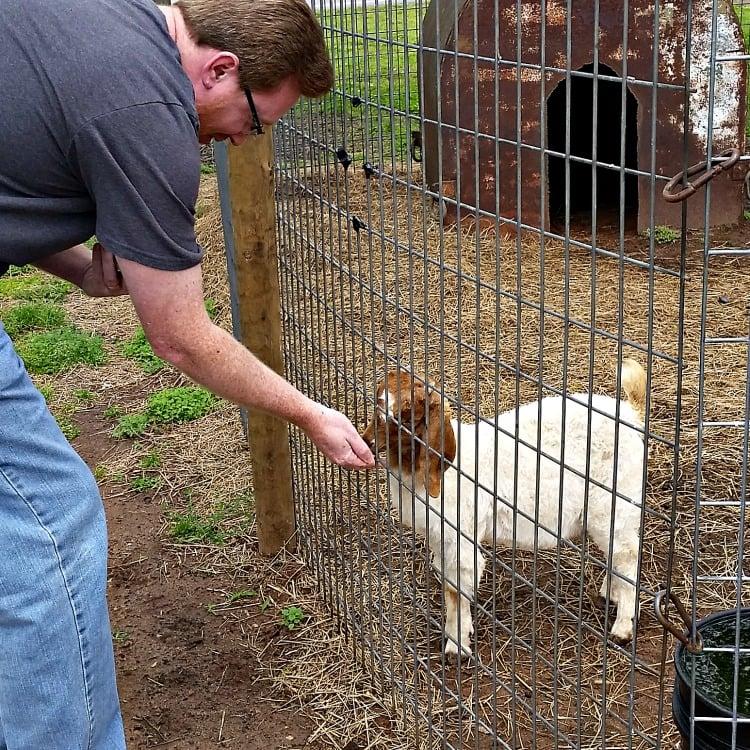 feed-the-goat-at-the-mennonite-restaurant-in-montezuma-ga