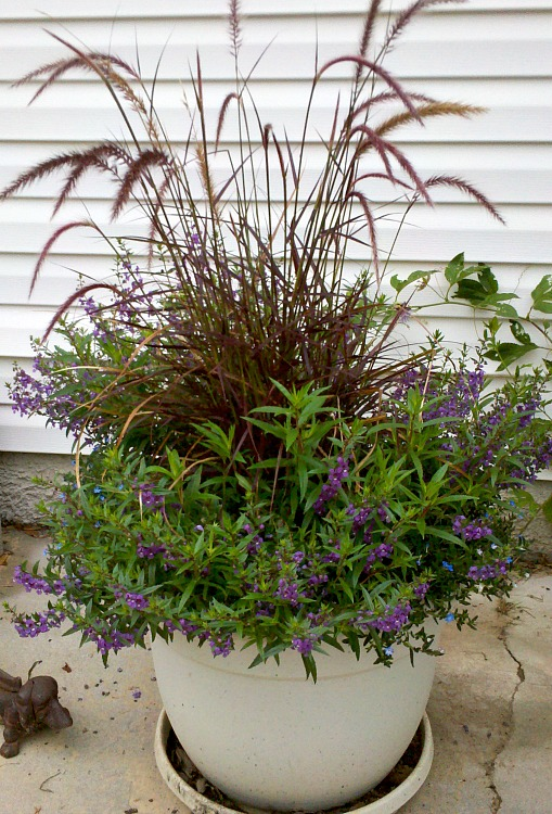 Best Annual Flowers for full sun. Best selection of annual flowers to plant in a sunny yard. Red Feather Grass and Mexican Heather in a large flower container