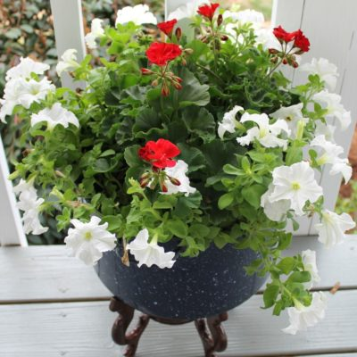 Upcycle An Enamelware Canner Pot Into A Large Flower Container
