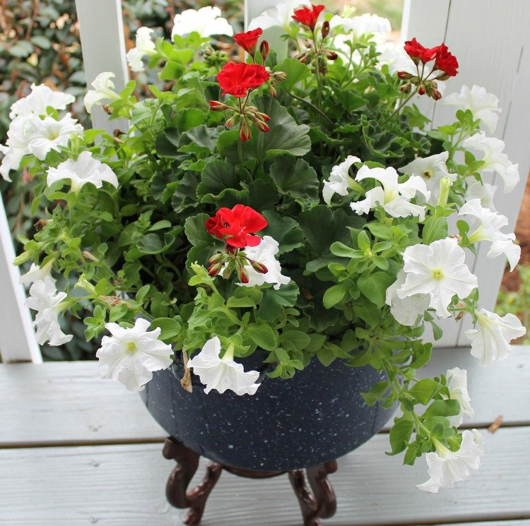 Upcycle an old enamelware canner pot into a unique flower container. #gardenproject #outdoordecor