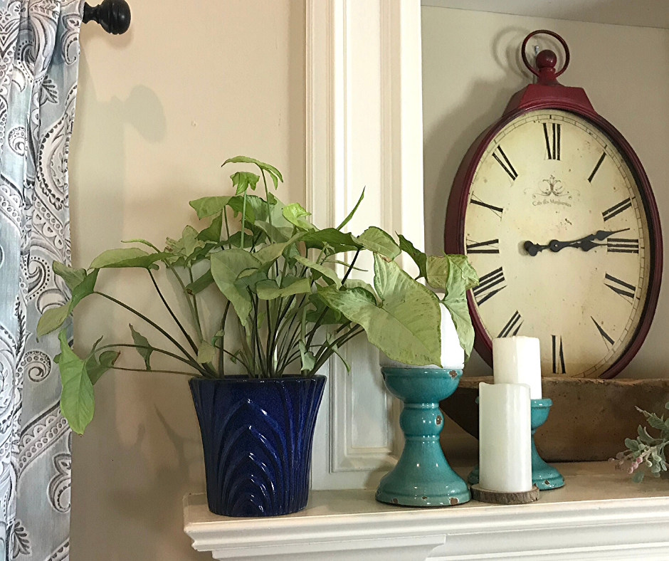 Arrowhead Plant in a deep blue container used as mantle decor for Spring. A vignette created using an Arrowhead Vine houseplant paired with candles on a mantle