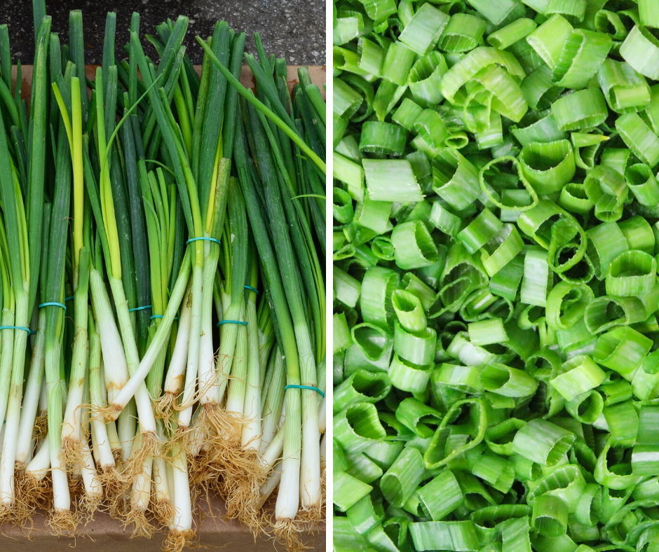 Fresh from the garden green onions
