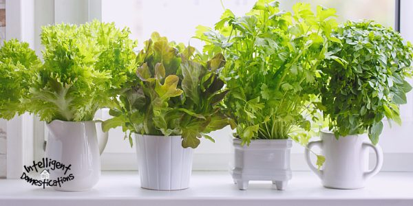 Grow your own fresh herbs for cooking