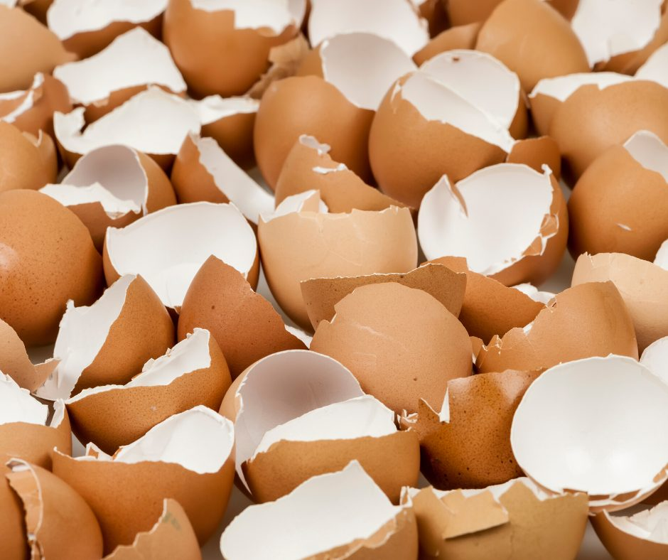 a picture of lots of broken egg shells