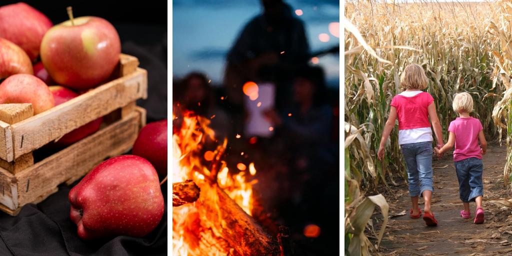 Apples. Bonfire and Corn Maze