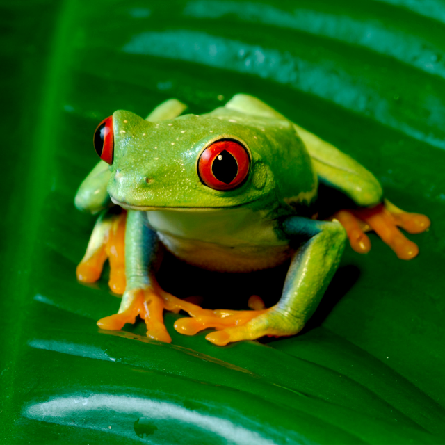 picture of a frog with orange feet
